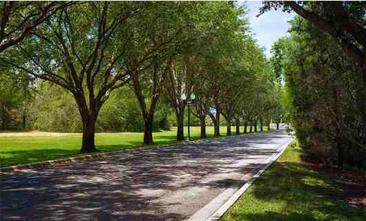 Silver Lake Resort Tree Lined Drive
