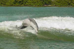 Dolphin Encounter 5